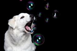 Hund_2